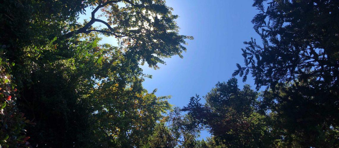 RHS Tree Blog